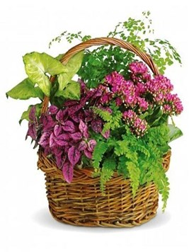 Plants: Plant Basket