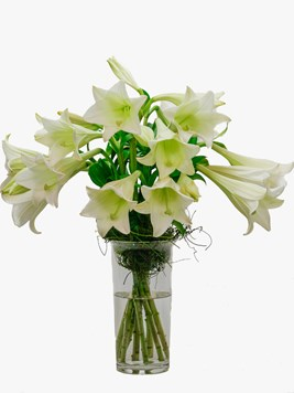 Arrangements: St Joseph Lilly Vase Arrangement
