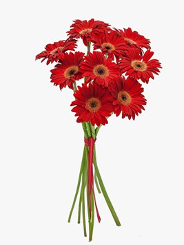 Bouquets: Romantic Red Gerberas